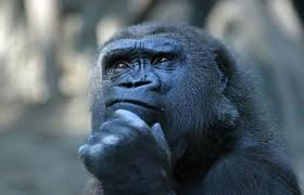 """Princípios da Liderança no filme """"Planeta dos Macacos – A Origem ..."""