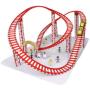 roller-coaster_thl
